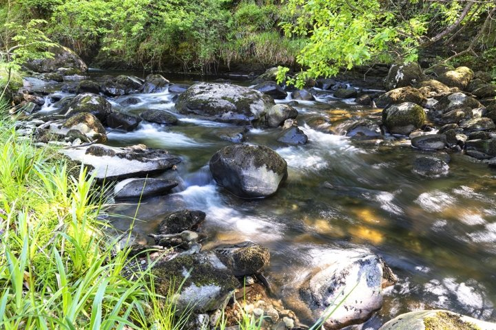 Mountain stream flowing down from the mountains to Teletskoy