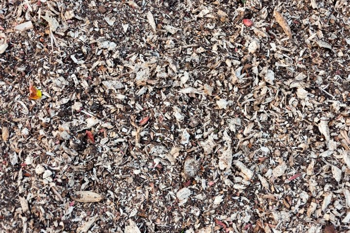 A nicebark wood brown chips mulch texture background.