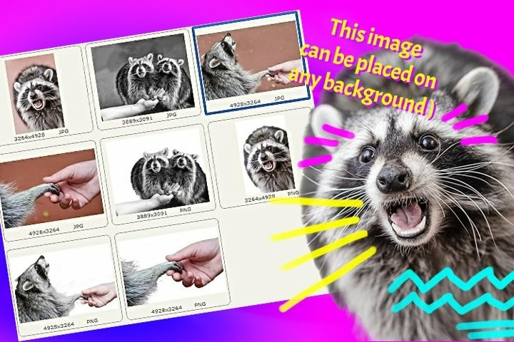 4 pictures of raccoons - Be my valentine!