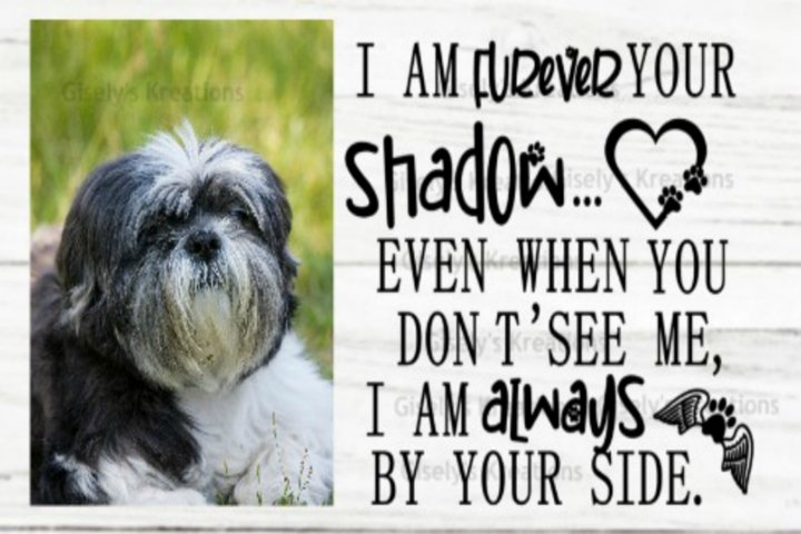 Furever your shadow pet memorial