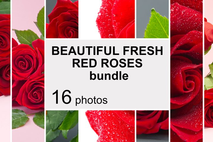 BEAUTIFUL FRESH RED ROSES. 16 Photos