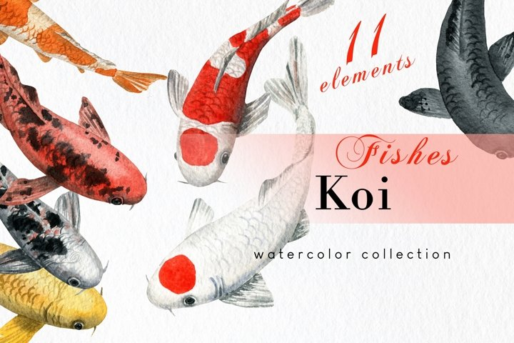 Watercolor Koi Fish Clipart with seamless pattern and border