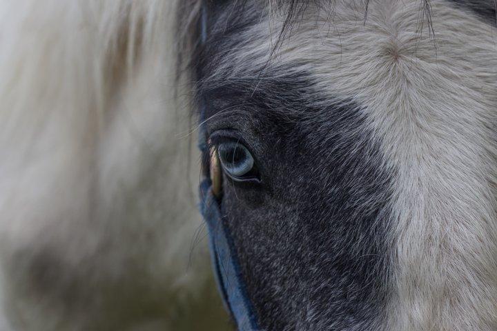 Close Up Horses Eye