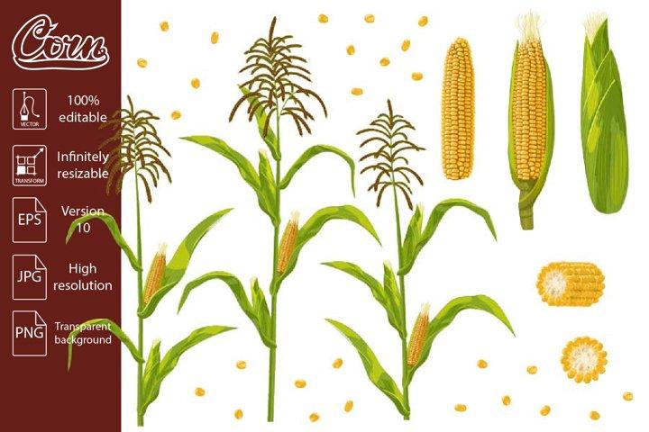 Corn cob, grain and maize plant set