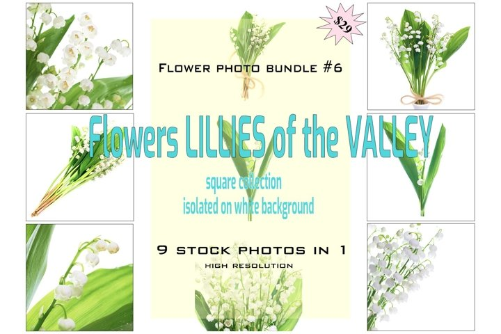 FLOWER PHOTO BUNDLE #6