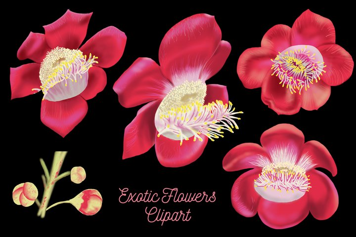 Exotic Flowers Digital Clipart