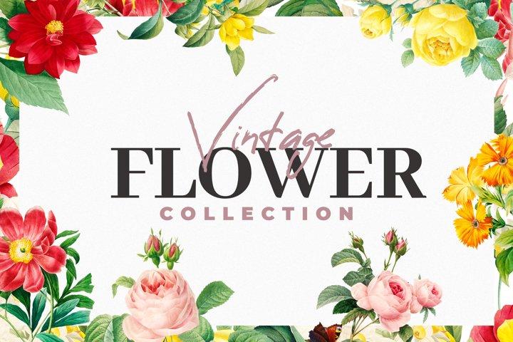 Vintage Flower Graphics Bundle