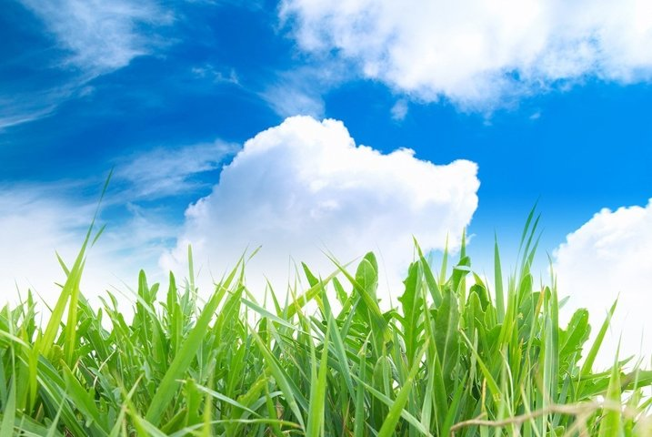 Green grass with cloudy sky in the sunny day
