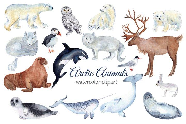 Arctic Animals Watercolor Clipart, Winter Clipart