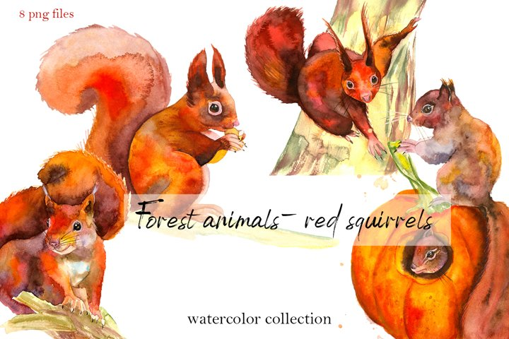 Forest animals - red squirrels. Watercolor