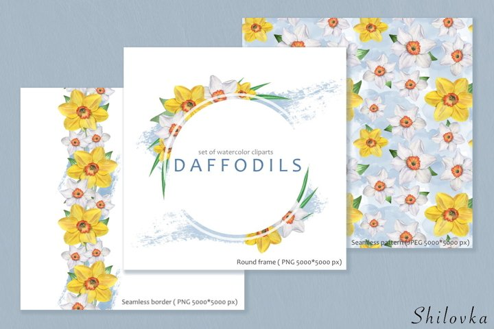 Daffodils flowers. Watercolor illustration