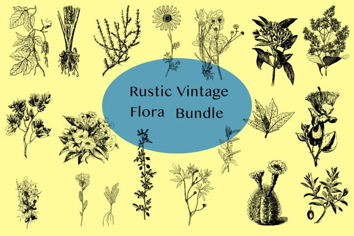 Vector Vintage Flora Illustrations