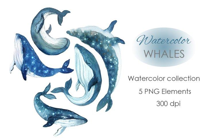 Watercolor Clipart. Whale Clipart. Ocean Clipart.