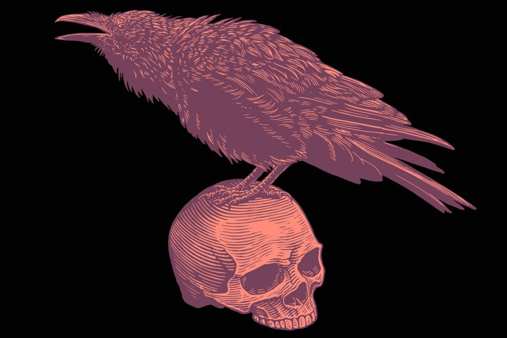The Raven sits on the skull. Vector engraving.