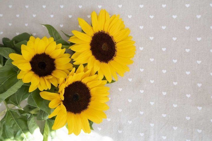 Yellow sunflowers flat lay with copy space for your design