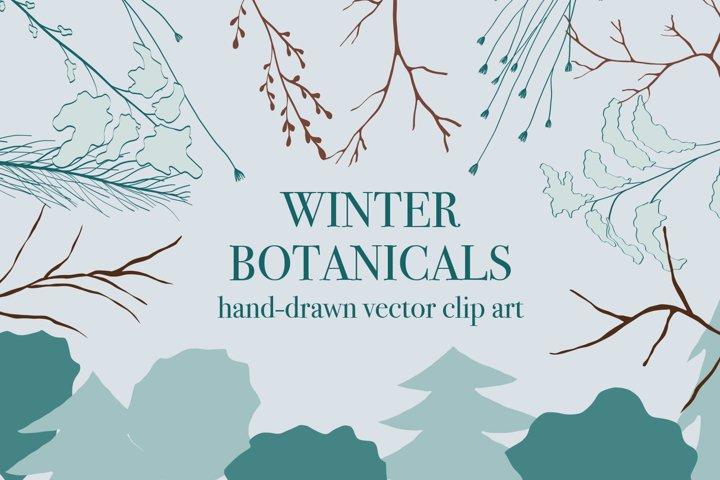 Botanical / Winter / Holiday / Vector / Clip art