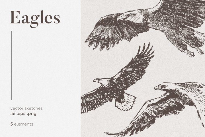 Collection of eagles drawings