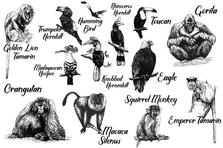 Birds & Primates