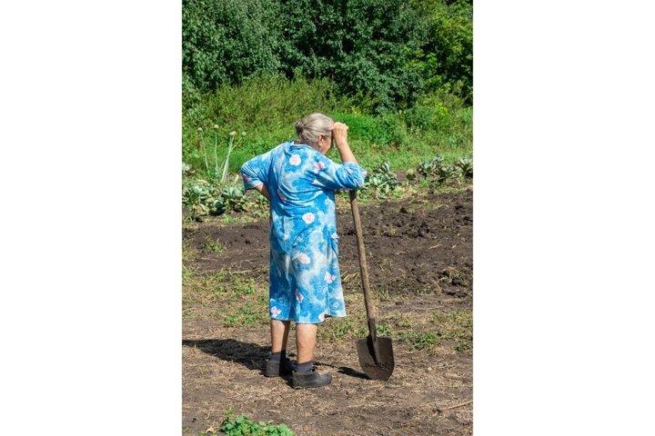 people was digging potatoes garden