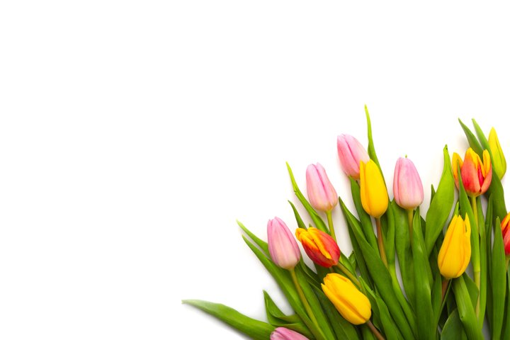 Banner with a bouquet of tulips on white background.