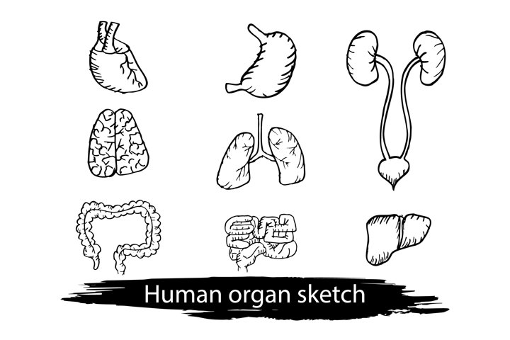 Internal human organs hand drawn icons set