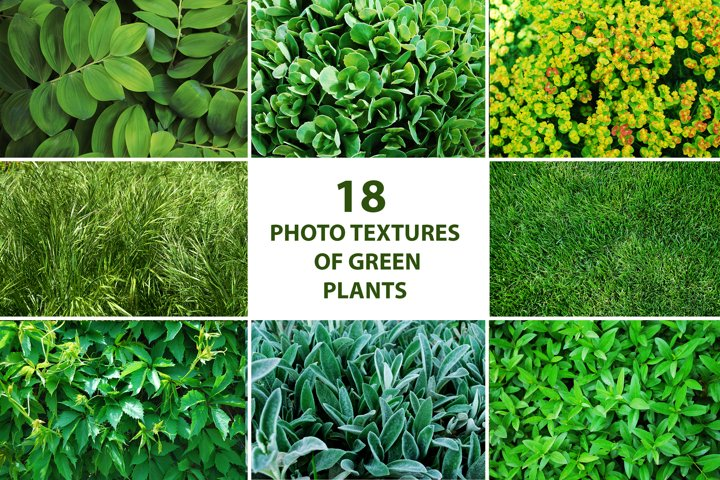 Set of textures and macro photos of greenery