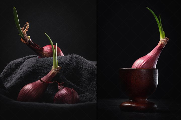 Sprouting Red Onion on Black - Still Life