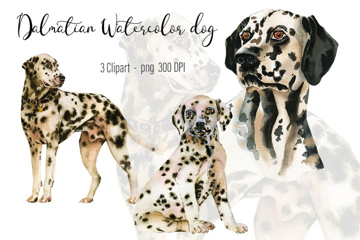 Dalmatian Watercolor dog clipart