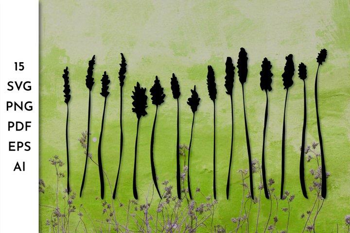 Grass SVG. Herbs. Botanical SVG. Stem SVG