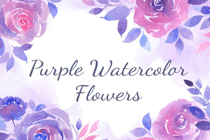 Set of Watercolor Purple Roses