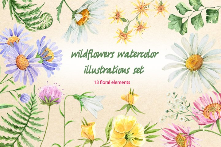 wildflowers watercolor illustrations set