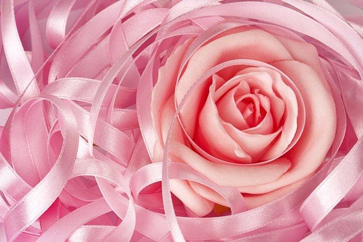 Pink rose and ribbon