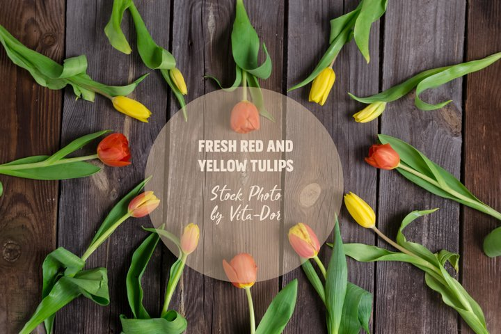 Fresh red and yellow tulips on a rustic wooden background