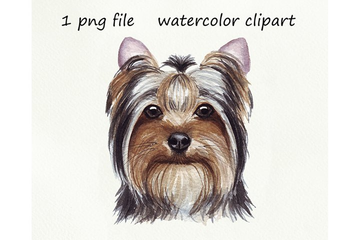 Watercolor dog png, Yorkshire Terrier, hand drawn