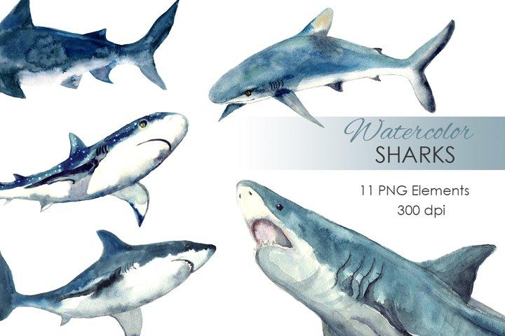 Watercolor Clipart. Watercolor Shark Clipart. Baby shark