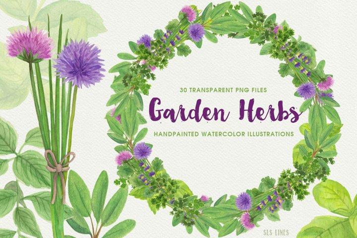 Garden Herbs Watercolor Clipart, PNG