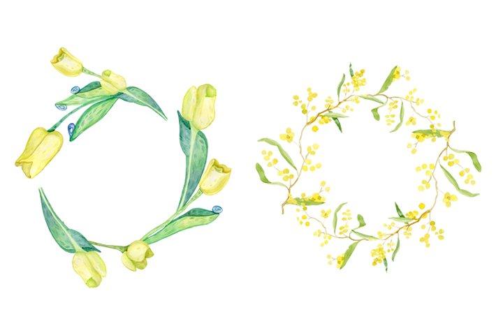 Mimosa. Acacia. Tulips.