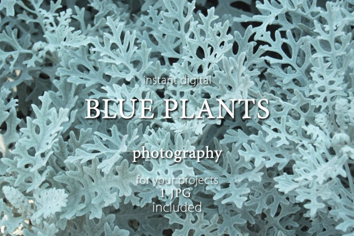 Blue plants background. Photography