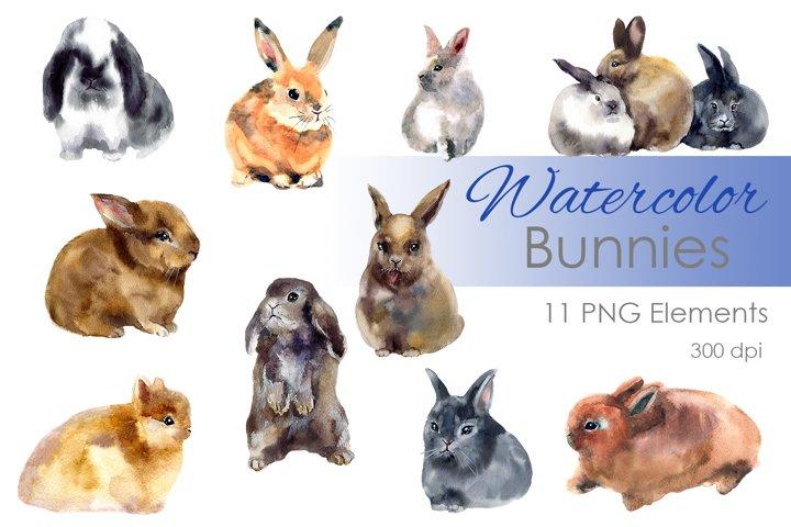 Watercolor clipart. Digital clipart. Bunny art clipart
