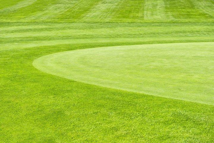 Golf field Green grass field background