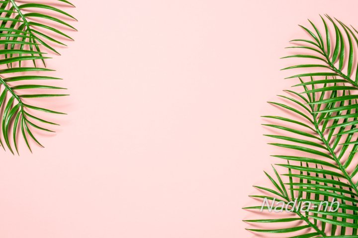 Green leaves on pink background.
