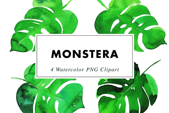 Watercolor Monstera | Clipart PNG Illustrations