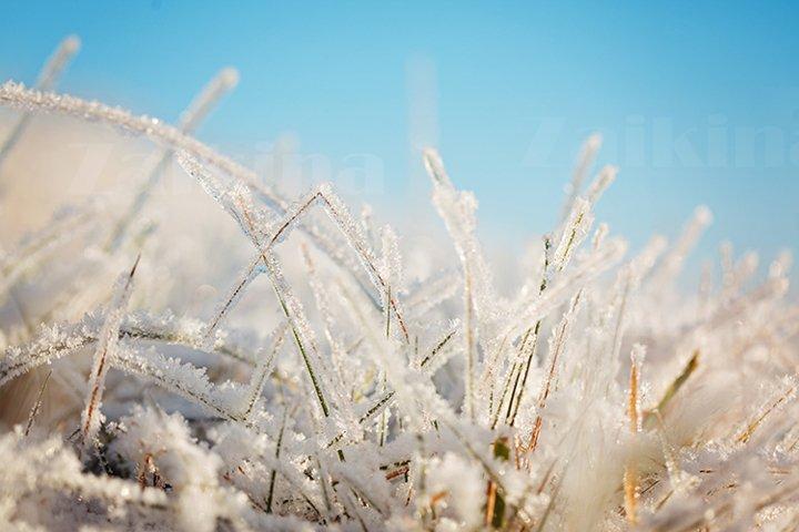 Frozen Grass on Blue Sky Backgound. Winter landscape.