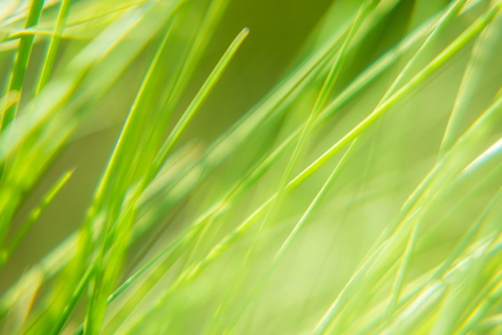 Bright vibrant green grass close-up