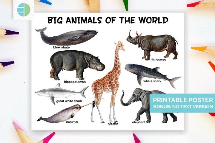 Animal Poster - Homeschool Room