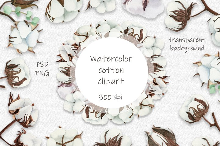 Watercolor cotton clipart. Cotton flowers.