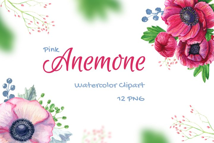 Watercolor Anemone Flowers Clipart Pink