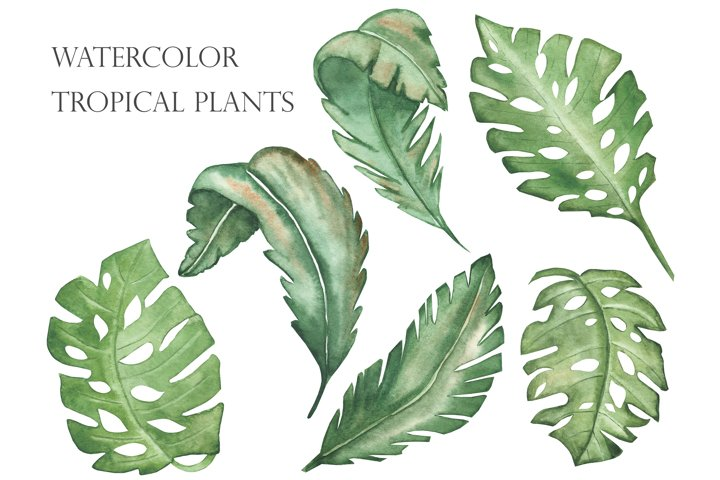 Watercolor tropical green leaves set and pattern