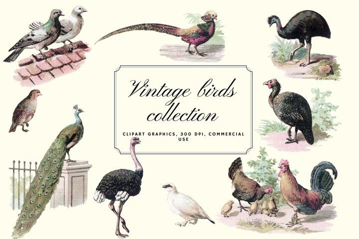 Vintage antique bird clip art graphics, Retro pigeons birds