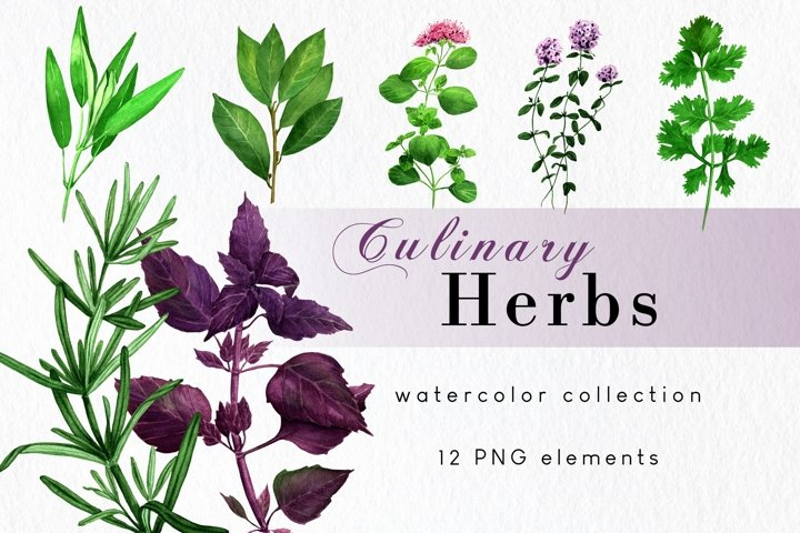 Watercolor Culinary Medicinal Herbs Clipart, Kitchen herbs